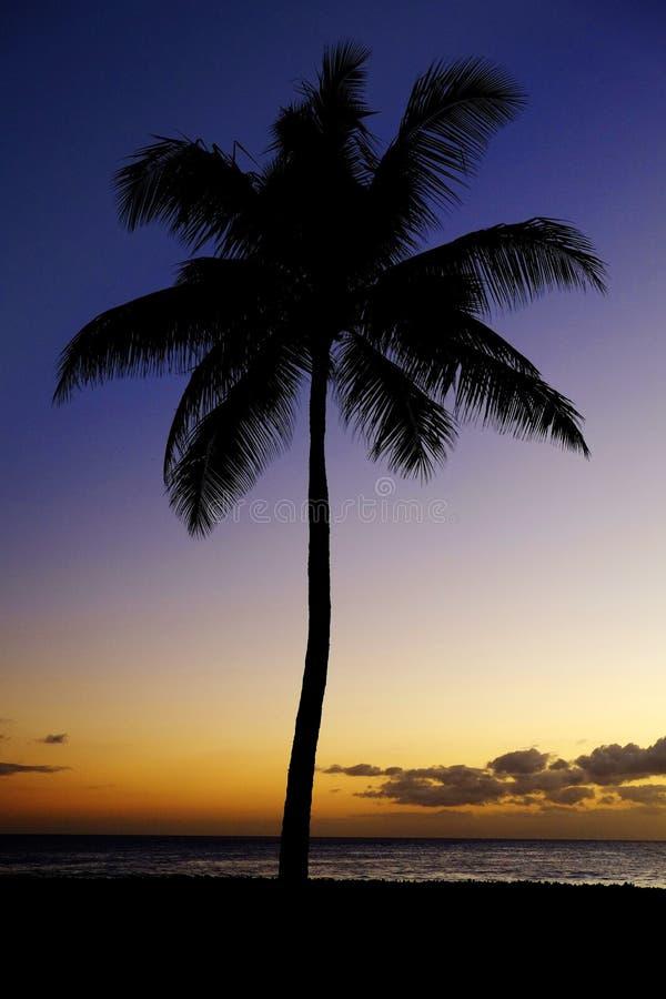 Palme-Sonnenuntergang nahe Ozean-Strand-tropischem Standort stockbilder