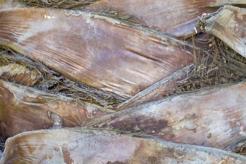 Palme-Stammhintergrund lizenzfreies stockbild