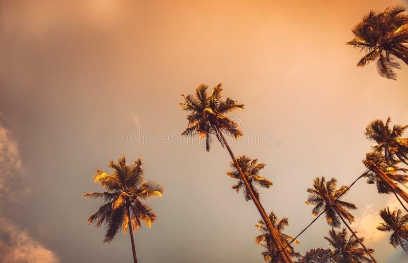 Palme sul tramonto immagine stock libera da diritti