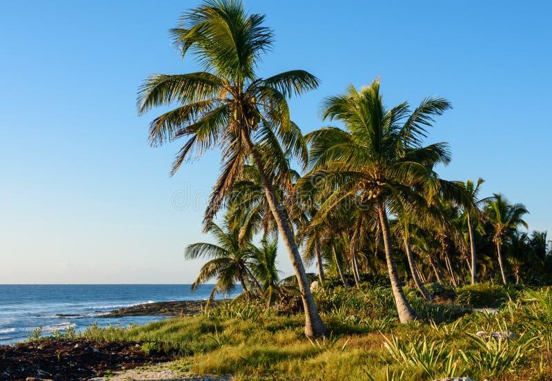 Palme sulla riva tropicale fotografia stock libera da diritti