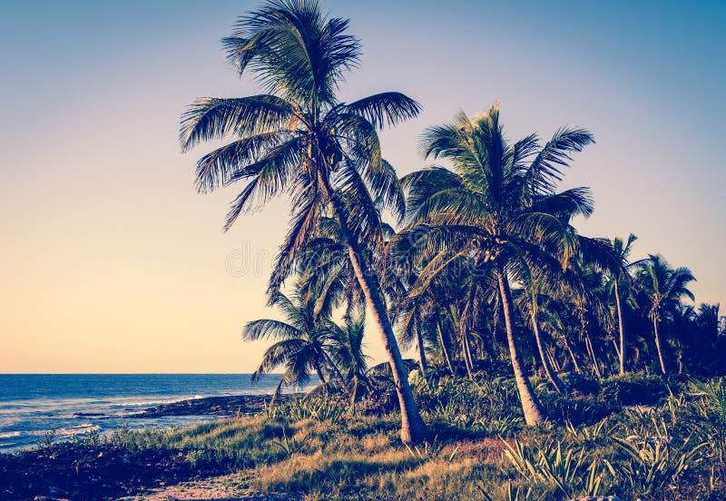 Palme sulla riva tropicale Retro, annata stilizzata fotografia stock