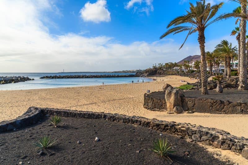 Palme sulla spiaggia del fenicottero immagini stock libere da diritti