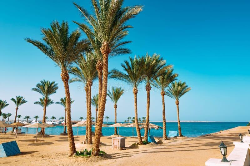 Palme sulla spiaggia nell'Egitto sul Mar Rosso fotografie stock