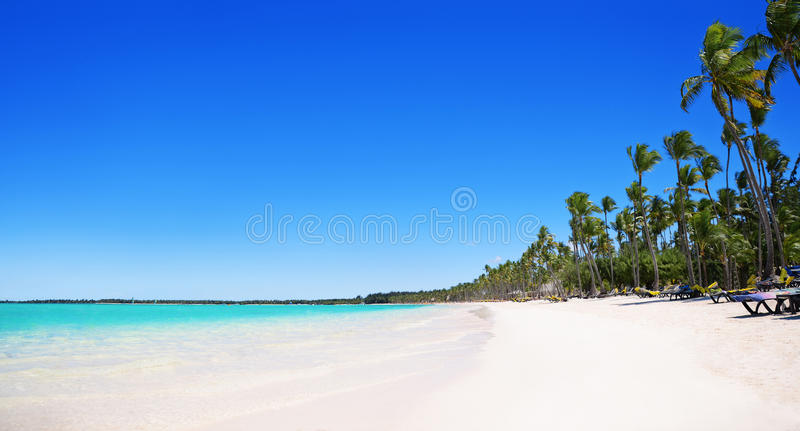 Palme sulla spiaggia tropicale, Bavaro, Punta Cana, dominicano immagini stock libere da diritti