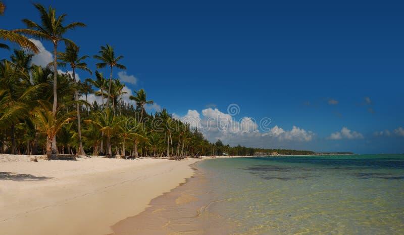 Palme sulla spiaggia tropicale, Bavaro, Punta Cana, dominicano fotografie stock