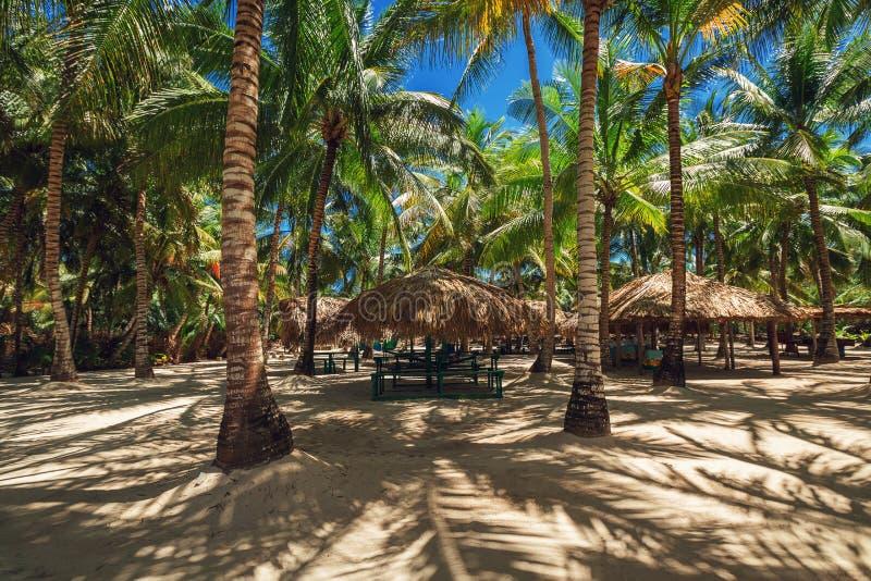Palme sulla spiaggia tropicale Isola di Saona fotografia stock libera da diritti