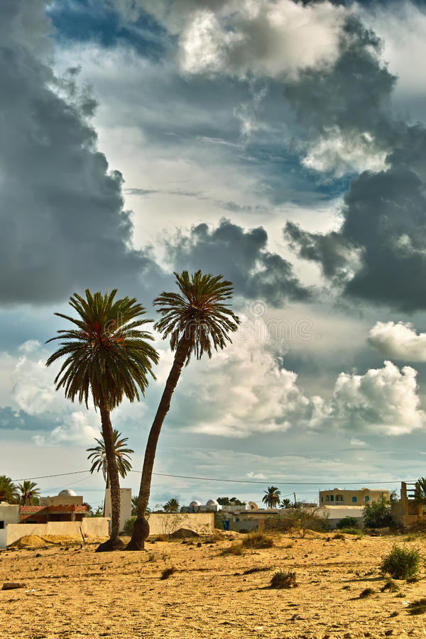 Palme to Djerba. Djerba largest island of North Africa's east coast near the border with Tunisia and Libya, with thousands of palm trees, almost completely level royalty free stock image