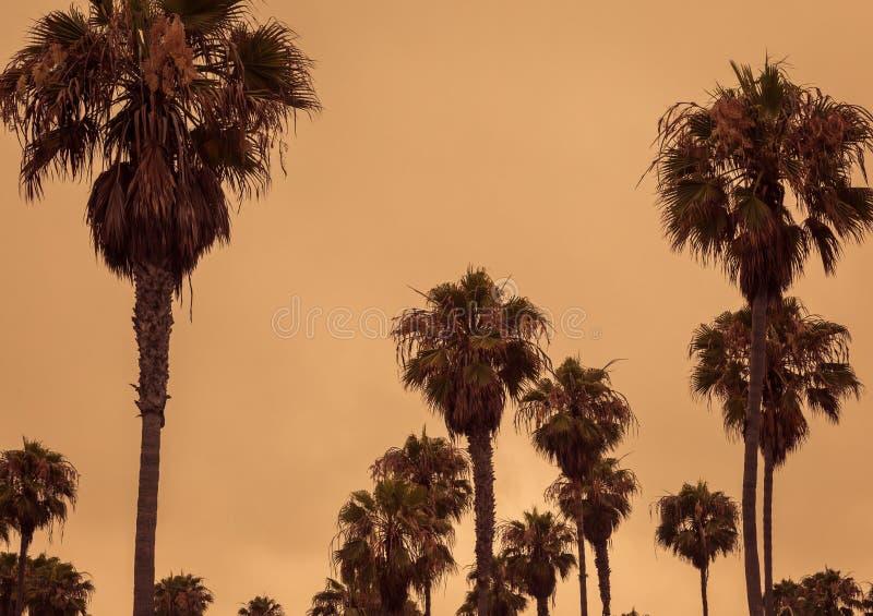 Palme tropicali contro un cielo arancio fotografie stock libere da diritti