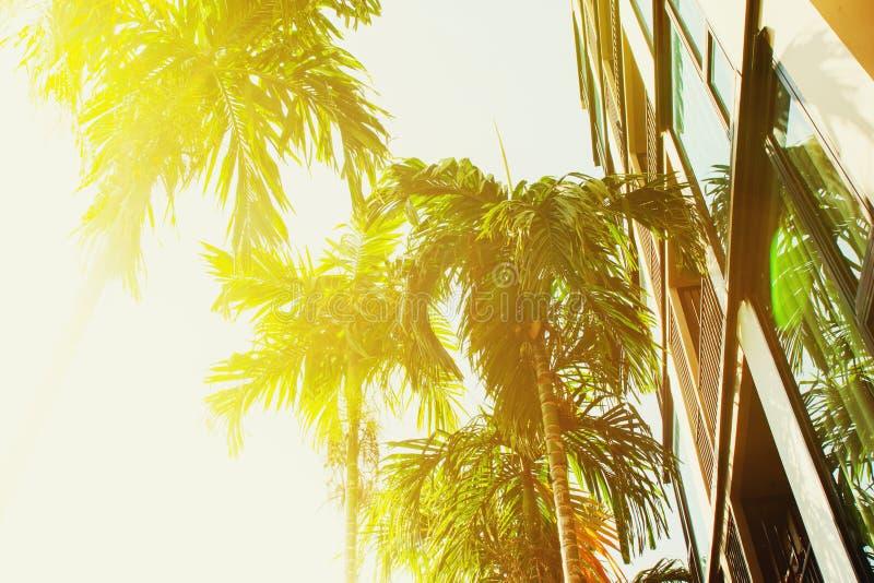 Palme tropicali del gruppo vicino con la costruzione di appartamento immagini stock