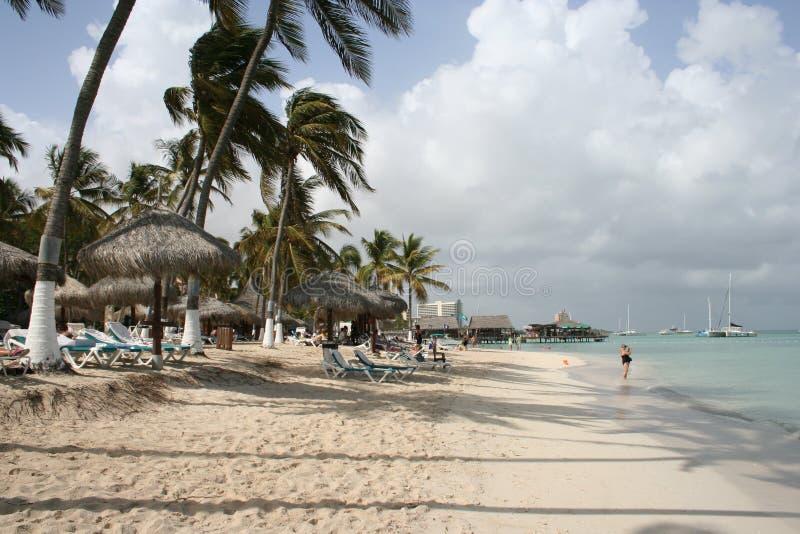 Palme tropicali dell'isola immagini stock