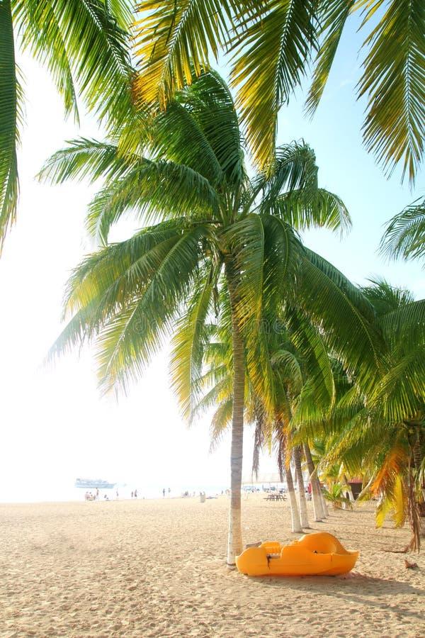 Palme tropicali della spiaggia del nord di Isla Mujeres fotografia stock libera da diritti