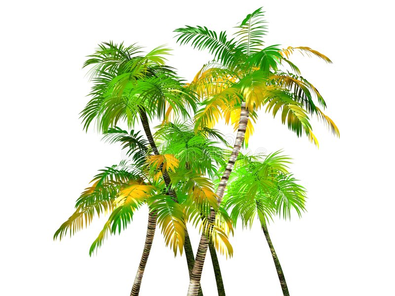 Palme tropicali, isolate illustrazione di stock