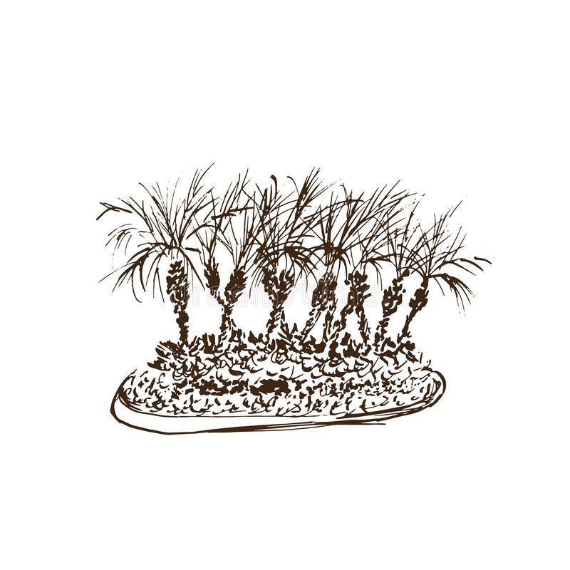 Palme tropicali isolate su priorit? bassa bianca Illustrazione del gruppo dei cocchi Schizzo disegnato a mano di vettore illustrazione vettoriale