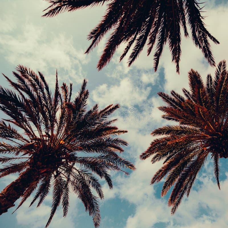Palme und blauer Himmel Palm Beach-Modehintergrund stockfotos