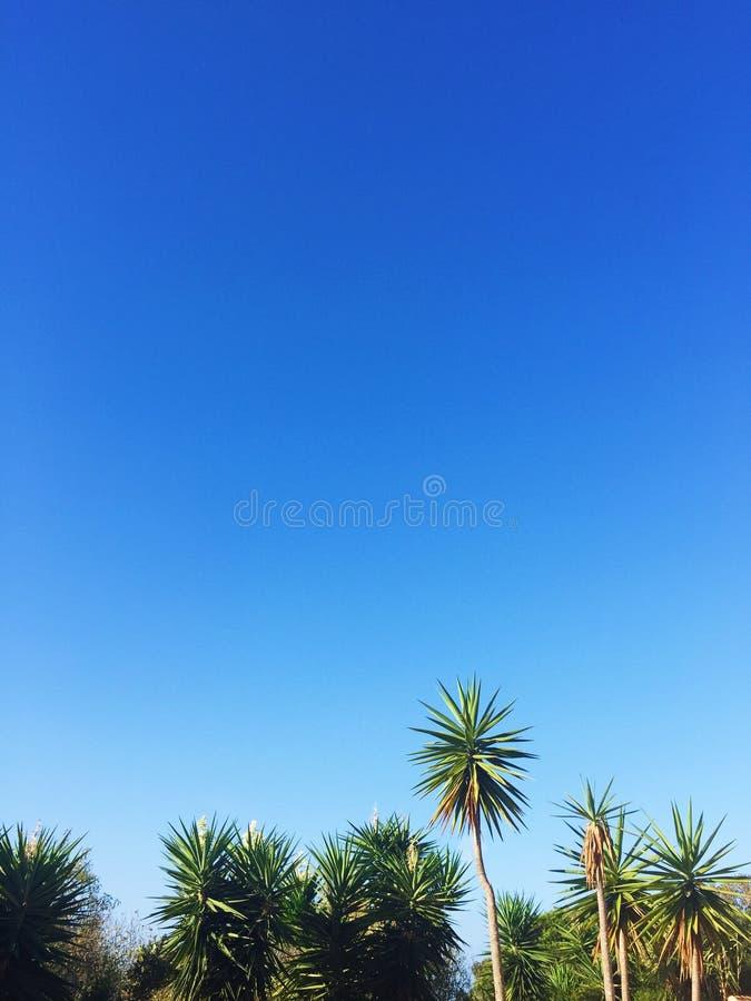 Palme und blauer Himmel - Reise-, exotische und tropischehintergründe redeten Konzept an stockfoto