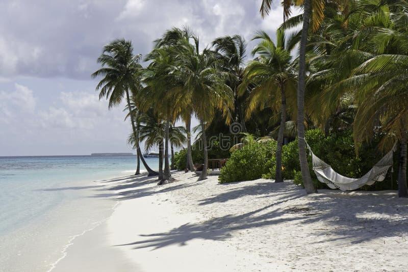 Palme und eine Hängematte, Maldives lizenzfreie stockfotos