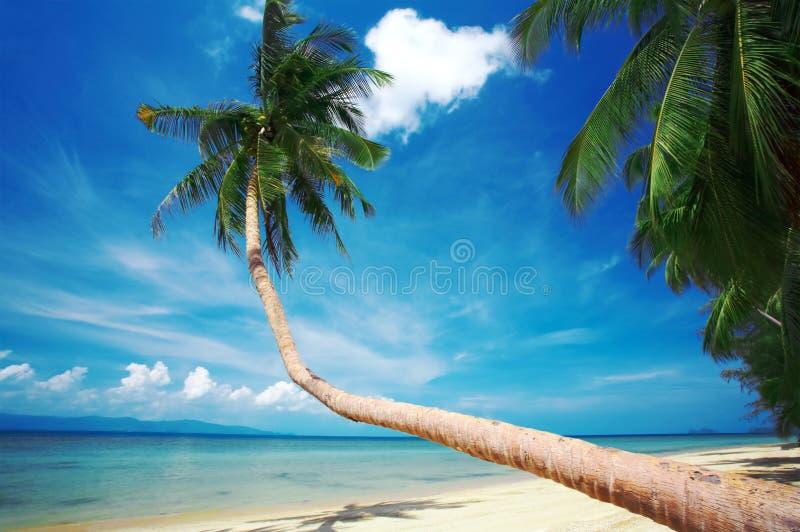 Palme und Glück lizenzfreie stockbilder