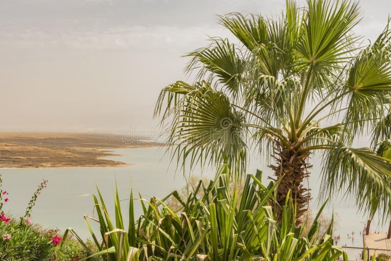 Palme und im Hintergrund das Wasser des Toten Meers israel lizenzfreies stockfoto