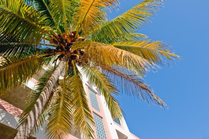 Palme und modernes Gebäude lizenzfreie stockfotografie