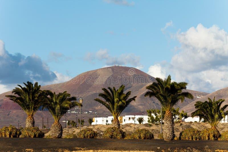 Palme und Montana Baja, Lanzarote stockfotografie