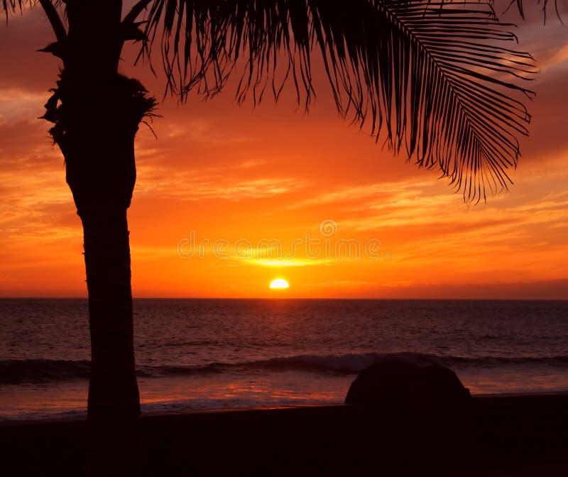 Palme und Sonnenuntergang stockfotos