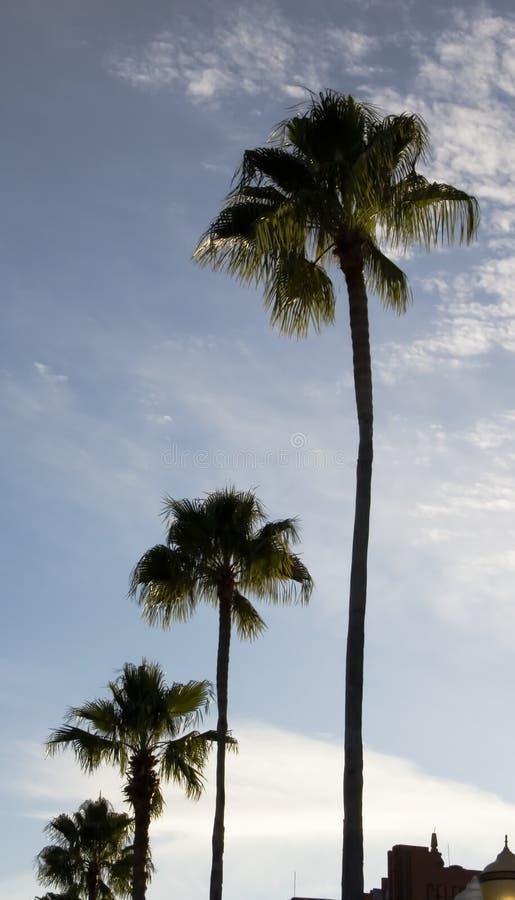 Palme-verschwindende Zeile stockfoto