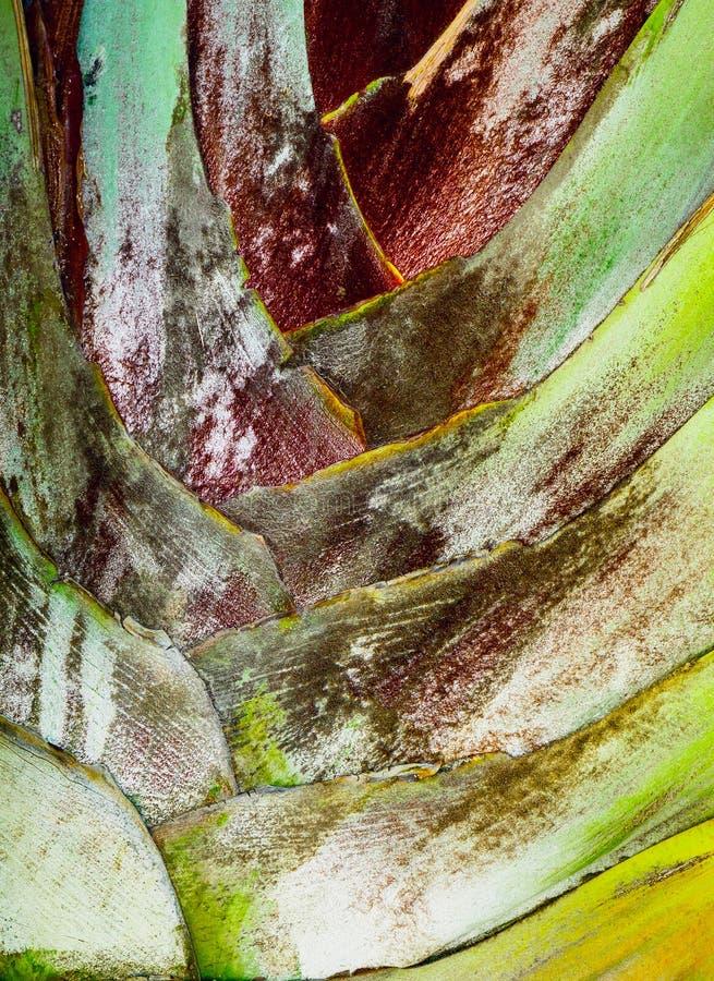 Palme von Bananenblättern stockfotos