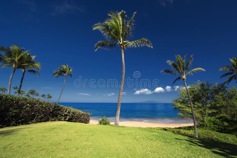 Palme vor Ulua-Strand, Süd-Maui, Hawaii, USA stockfoto