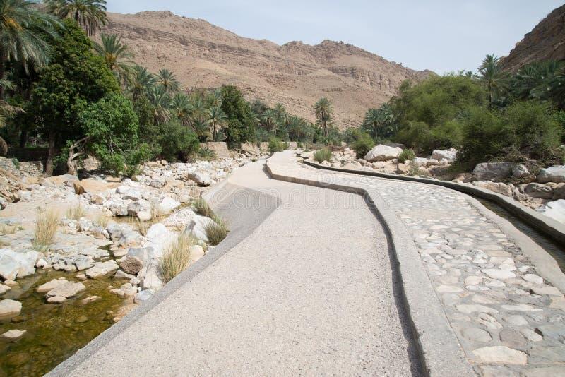 Palme in Wadi Bani Khalid immagine stock