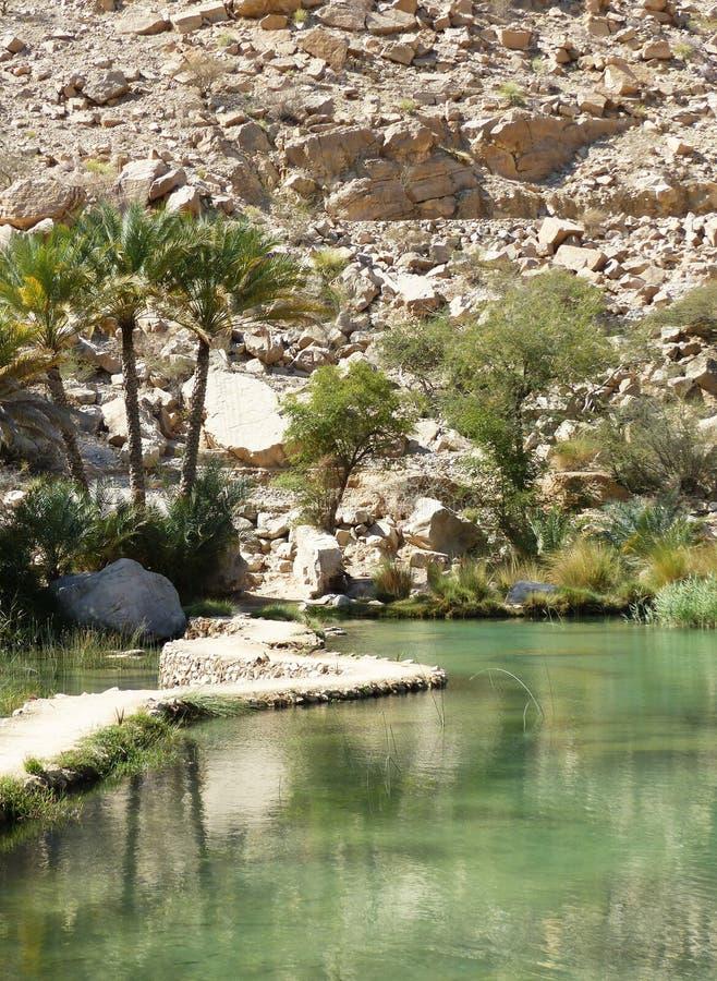 Palme a Wadi Bani Khalid, Oman immagini stock