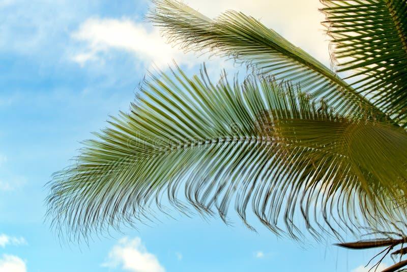 Palmebl?tter gegen den blauen Himmel stockfoto