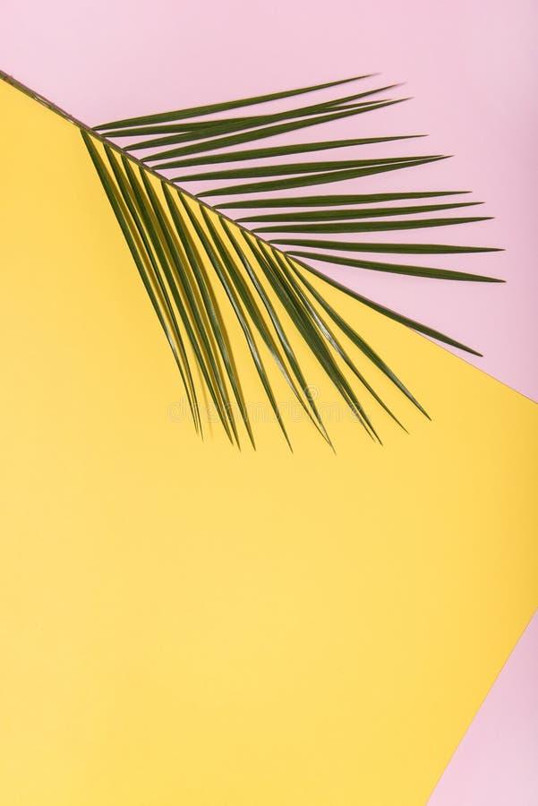 Palmeblatt auf buntem Pop-Arten-Hintergrund lizenzfreie stockbilder