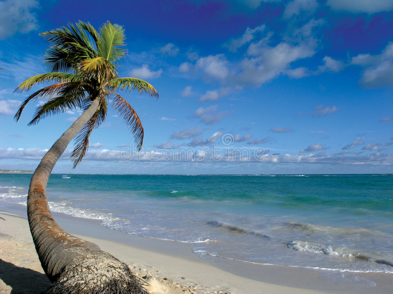 Download Palmeira foto de stock. Imagem de dominican, scenic, américa - 105928
