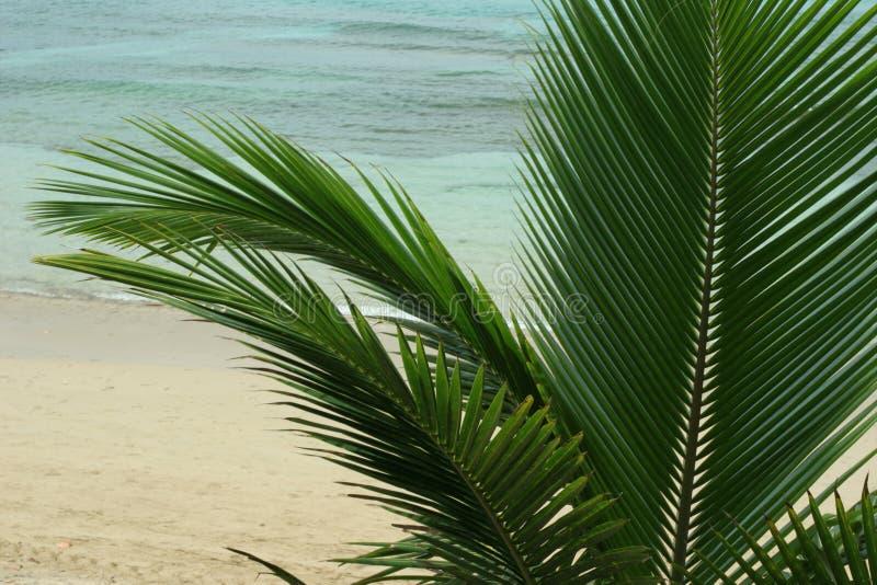 Palmeira imagem de stock royalty free