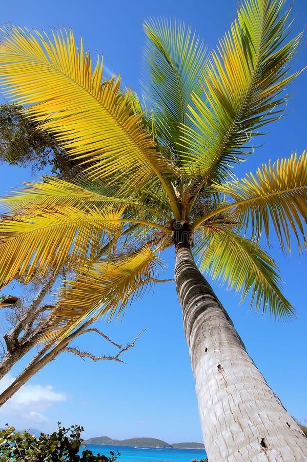 Download Palmeira imagem de stock. Imagem de paradise, quente, feriado - 537645