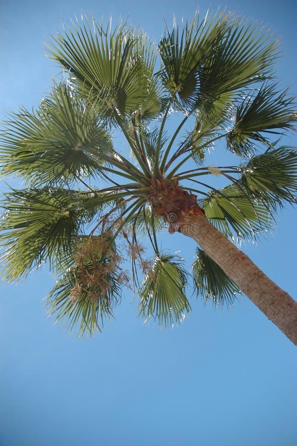 Palmeira fotos de stock royalty free