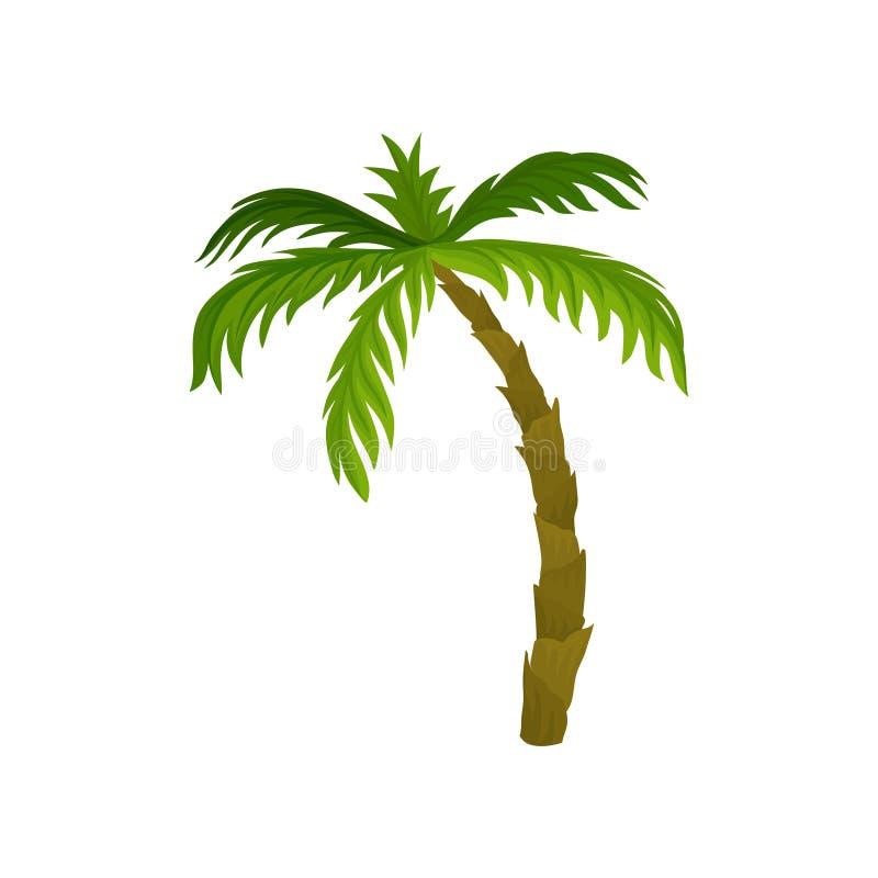 Palmeira alta com as grandes folhas verde-clara Planta tropical Tema da natureza Vetor liso para o cartão do verão ou ilustração stock