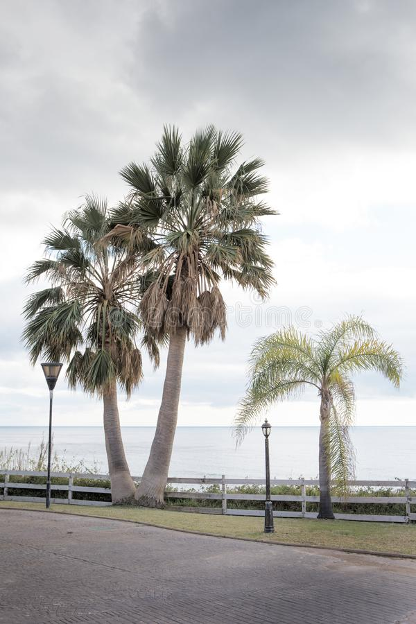 Palmeira ao longo da estrada em spain imagens de stock