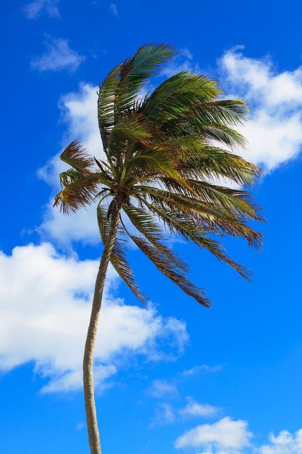 Palmeira bonita fotos de stock royalty free