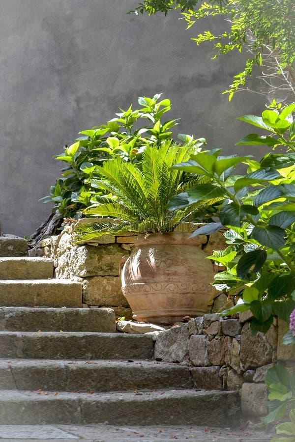 Palmeira bonita em um potenciômetro de argila imagem de stock royalty free