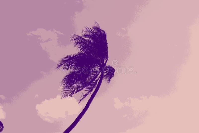 Palmeira bonita fundida pelo vento fotos de stock