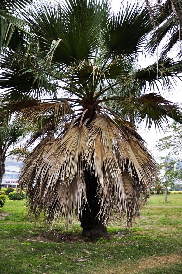 Palmeira bonita fotografia de stock