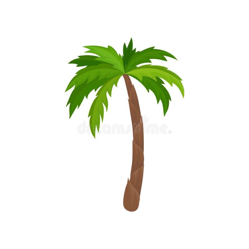 Palmeira com folhas verde-clara Planta do vetor liso da floresta tropical para anunciar o cartaz ou a bandeira do curso ilustração royalty free