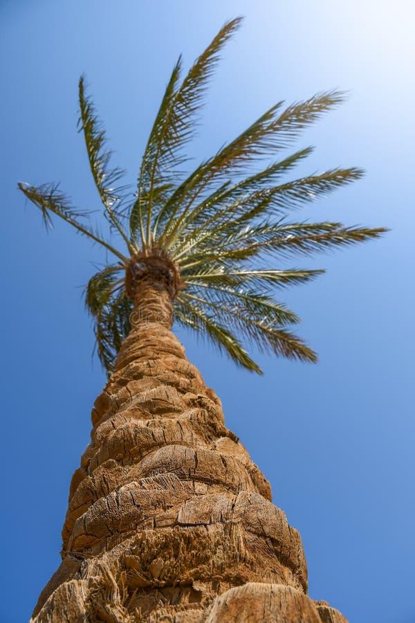 Palmeira com o tronco agradável grande da textura em uma praia com luz do sol foto de stock royalty free