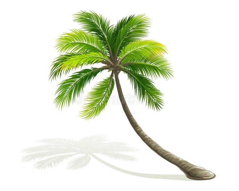 Palmeira ilustração royalty free