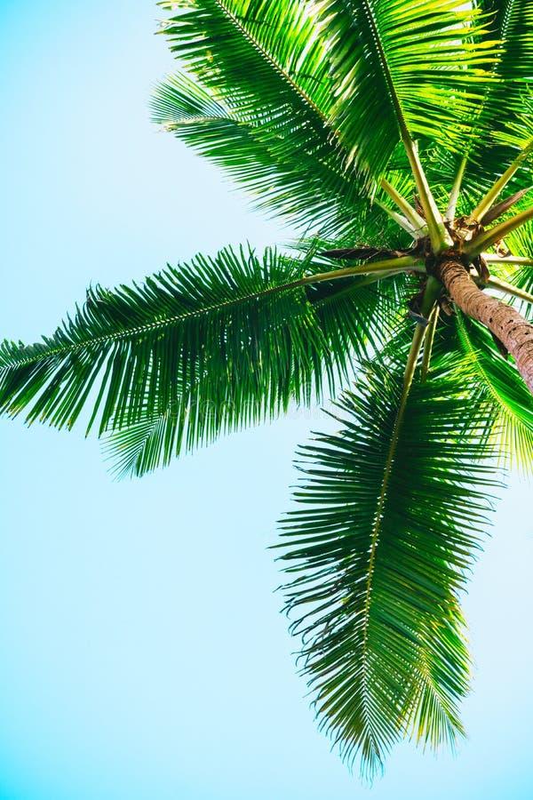 Palmeira contra o fundo do céu azul imagens de stock royalty free