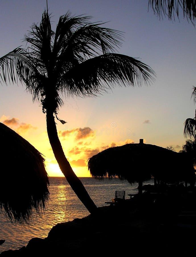 Palmeira curvada no por do sol imagens de stock