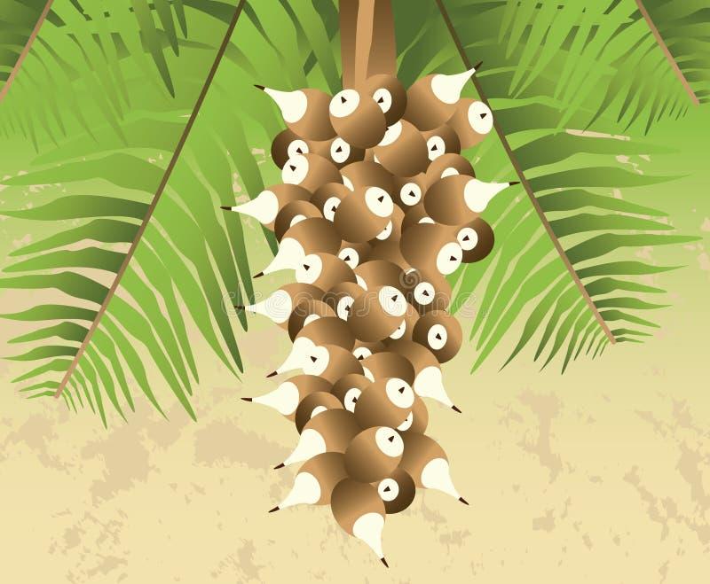 Palmeira da porca de Cohune ilustração royalty free