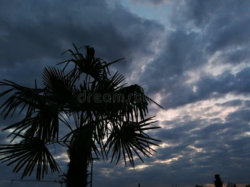 Palmeira da praia do feriado foto de stock