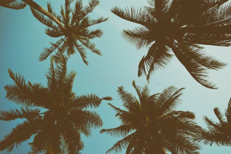 Palmeira da silhueta com filtro do vintage (fundo) fotografia de stock